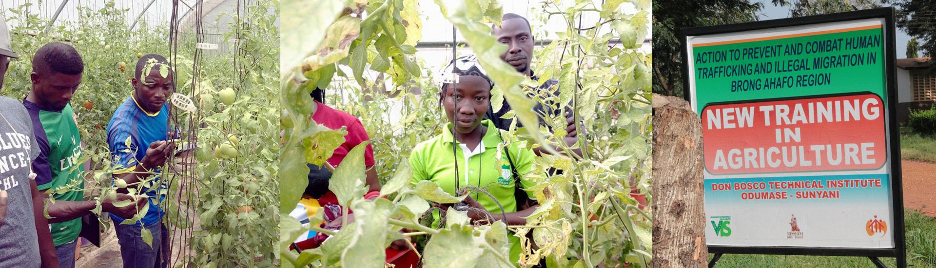 Agricultura para combatir a las mafias de migración ilegal en Ghana